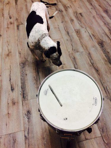 a dog with a drum
