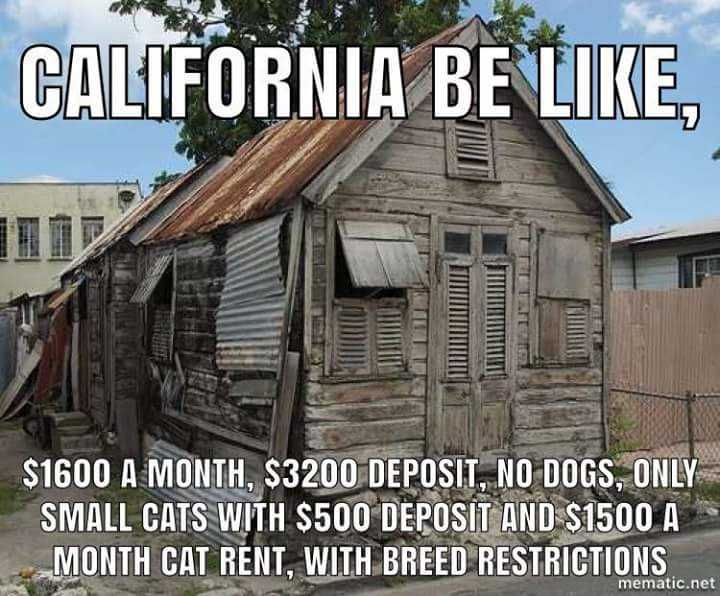 "Landlord Partnerships: ""California be like, $1600 a month, $3200 deposit, no dogs, only small cats with $500 deposit and $1500 cat rent, with breed restrictions."" Picture of a house in shambles."